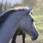 Experience horseback riding in Hawaii.
