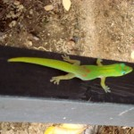 Hawaii's Land Critters – Colorful and Cautionary